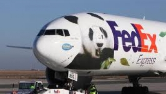 Pandas et dragons