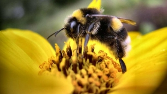 Pauvres abeilles, pauvres de nous