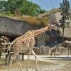 Le zoo de Vincennes, du béton et de rares animaux