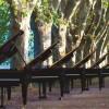 Des pianos et des cigales