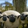 Shaun, le mouton irresistible