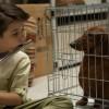 Le teckel, un portrait au vitriol de l'Amérique à travers un chien