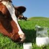 Le lait dans tous ses états
